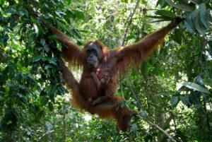Sumatra Dschungel-Trekking: Bukit Lawang vs. Ketambe