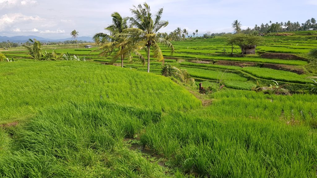 Reisterrassen nahe Bukittinggi