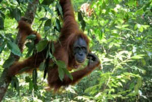 Backpacking Sumatra: Hilfreiche Infos für dein großartiges Abenteuer