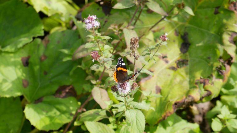 Schmetterling an den Plitvicer Seen