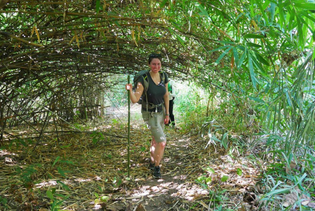 Trekking Chiang Rai: Bambuswald